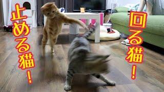 Download 全力で回る猫を全力で止めるねこが面白かわいい! Video