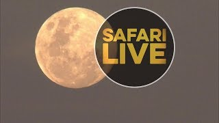 Download safariLIVE - Sunset Safari - June 16, 2019 Video