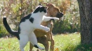 Download Cat vs dog!!(gatos vs perros) Video