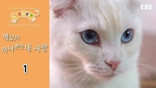 Download 고양이를 부탁해 - 베코의 하나뿐인 내 사랑 #001 Video
