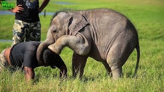 Download Save the wild elephants: Working to protect elephants in the wild Video