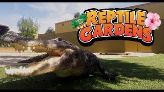 Download Reptile Gardens | World's Largest Reptile Collection Video