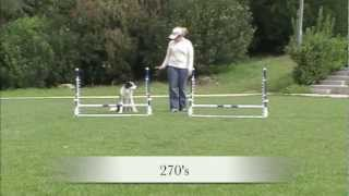 Download Jump practice patterns - Agility Dog Training Video