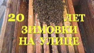 Download 20 лет зимовки пчел на улице. Как лучше определить состояние зимующих пчел Video