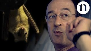 Download The bat man: Neuroscience on the fly Video