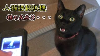 Download アプリ『人猫翻訳機』の反応が良すぎる黒猫(面白い&可愛い子猫)An application of cat exclusive use was tried. Video