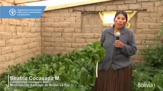 Download ″Crecemos juntos″: Tecnología y capacidades para mejorar la alimentación en el altiplano Video