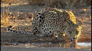 Download Djuma Game Reserve Waterhole - Live Cam Video