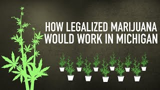 Download How legalized marijuana would work in Michigan Video
