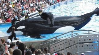 Download SeaWorld's Killer Whale's Splashing Visitors (in 2009) Video