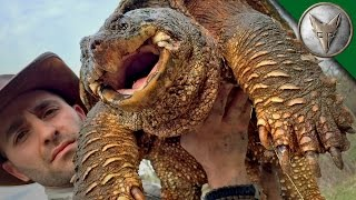 Download World's Most Famous Snapping Turtle - Dragon Tails Episode 1 Video