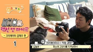 Download 고양이를 부탁해 - 랜선 캣 라이프 - 크리에이터 김메주 편 #001 Video
