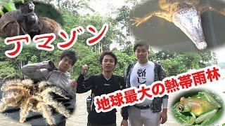 Download 【アマゾン1】命がけ!!野生のワニ・タランチュラたちとマジで遭遇した…。 Video