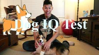 Download TESTING MY CORGI'S INTELLIGENCE - Dog IQ Test Video