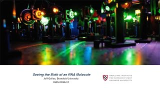Download Jeff Gelles | Seeing the Birth of an RNA Molecule || Radcliffe Institute Video