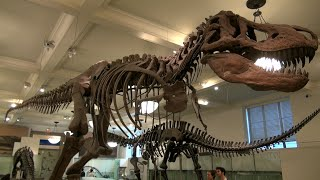 Download American Museum of Natural History in New York Video