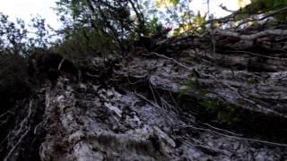 Download Parque Nacional Alerce Costero Video