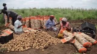 Download FAO Cultivando Sonhos- Moamba Video