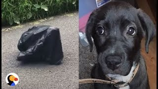 Download Puppy Left in Trash Bag in the MIDDLE OF THE ROAD UPDATE | The Dodo Video