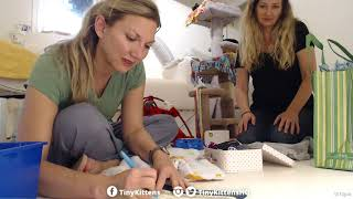Download Chloe packs her tiny suitcase and goes home! TinyKittens Video