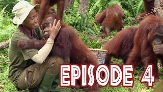 Download We Love Orangutans - ″Babysitter Coordinator, Sri Rahayu″ Video
