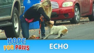 Download A dog with a broken leg ran 30 blocks in extreme pain until... Video