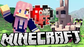 Download Kittens & Bunnies | Ep. 18 | Minecraft One Life Video