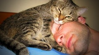 Download Cute Cats 😻😊 Sweet Loving Cats (Full) [Funny Pets] Video