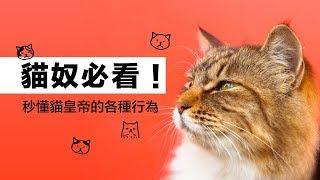 Download 貓奴必看!秒懂貓皇帝的各種行為|科學大爆炸EP.63 Video