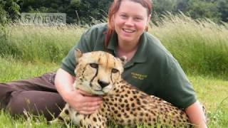 Download Zookeeper Rosa King killed by tiger at Hamerton Zoo Park Video