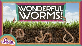 Download Worms Are Wonderful Video