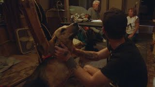 Download The Sad Situation When A Dog Is Mislabeled ″Aggressive″ Video