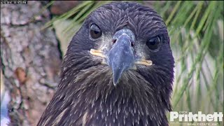 Download SWFL Eagles ~ Family Time Together 5.16.16 Video