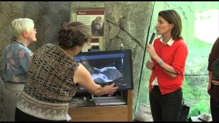 Download Heart Disease in Great Apes and Humans - 2012 Zoobiquity Conference Video