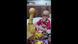 Download Viral Video UK: Baby gets trolled by rubber chicken Video