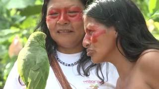 Download The Waorani Women of the Amazon, Ecuador Video