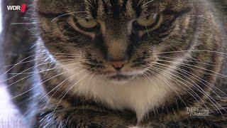 Download Können Katzen Menschen lieben?   WDR Video