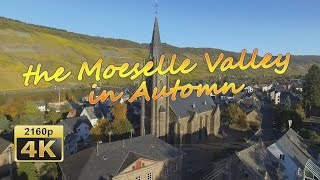 Download Wehlen at the Moselle in Autumn (Bird's Eye View) - Germany 4K Travel Channel Video