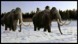 Download Tribute to Mammoths Video