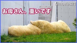 Download 足どかして下さい いつもと逆になったララとリラ Polar Bears sleep on the grass Video