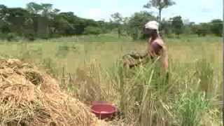 Download Improving food security and agricultural livelihoods in Northern Uganda Video
