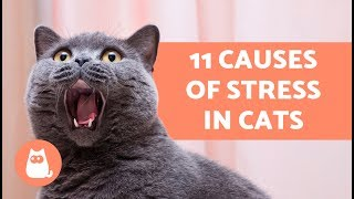 Download 11 Causes of Stress in Cats Video