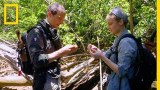Download Brie Larson Eats a Rhino Beetle | Running Wild With Bear Grylls Video