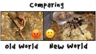 Download OLD WORLD vs NEW WORLD tarantulas !!! Q&A Video