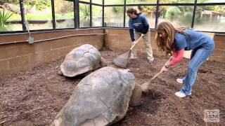 Download Keeper for a Day - Birds and Reptiles Video