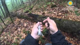 Download Ovenbird Pinpoint-GPS Tracker Retrieval: Smithsonian Migratory Bird Center Video