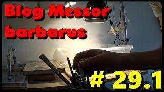 Download Blog Messor barbarus #29.1 - Petit tour de l'installation Video