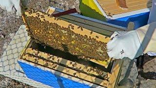 Download Honey Bee Hive Inspection Video