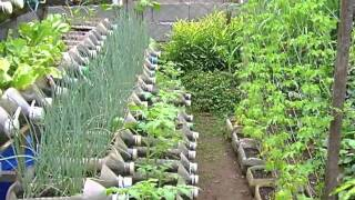 Download Risers in container gardening Video