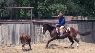 Download Monty Roberts' Flag Is Up Farms Celebrates 50 Year Anniversary in 2016 Video